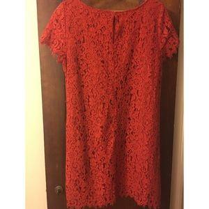 Lace Zara Dress